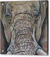 Echo Of The Elephants  Acrylic Print