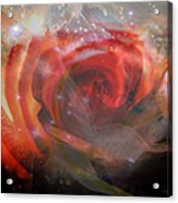 Echoes Of The Rose Acrylic Print