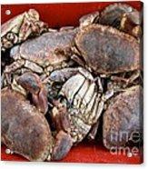 Edible Crabs  Acrylic Print