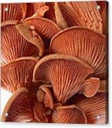 Edible Fungi 2 Acrylic Print