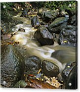 Edmond Forest Reserve On Saint Lucia Acrylic Print