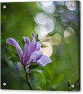 Effervescent Magnolia Acrylic Print