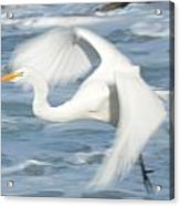 Egert In Flight Detail Acrylic Print