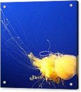 Egg - Yolk Jellyfish Acrylic Print
