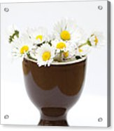 Eggcup Daisies Acrylic Print