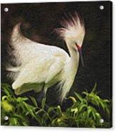 Egret 12 Acrylic Print