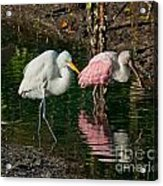 Egret And Pink Spoonbill Acrylic Print