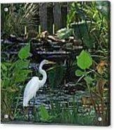 Egret At A Pond Acrylic Print