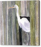 Egret At John's Pass Acrylic Print