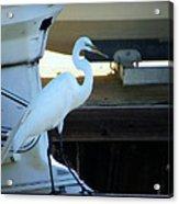 Egret At The Lake Acrylic Print