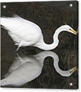 Egret Ballet Acrylic Print