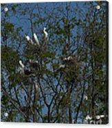 Egret Estuary   #6878 Acrylic Print