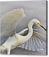 Egret Grace At The Beach Acrylic Print