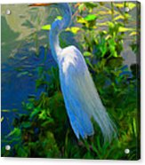Egret In Blue Acrylic Print