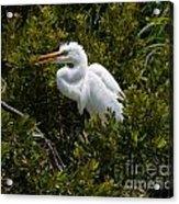 Egret In Bushes Acrylic Print