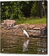 Egret In Central Park Acrylic Print