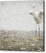 Egret In Rain Acrylic Print