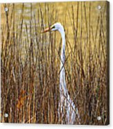 Egret In The Grass Acrylic Print