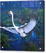 Egret In The Mist Acrylic Print