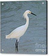 Egret In The Ocean Acrylic Print