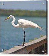 Egret On A Pier Acrylic Print