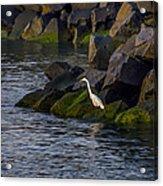 Egret On The Rocks Acrylic Print
