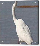Egret Out Fishing Acrylic Print