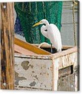Egret With Fishing Net Acrylic Print