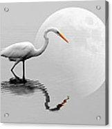 Egret With Moon  Acrylic Print