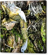Egrets Reflection Acrylic Print