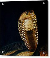 Egyptian Cobra Acrylic Print