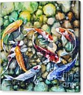 Eight Koi Fish Playing With Bubbles Acrylic Print