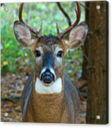 Eight Point Face To Face Acrylic Print