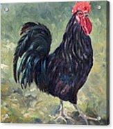 El Gallo - The Cockerel Acrylic Print