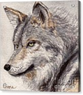 El Lobo Acrylic Print by Vikki Wicks