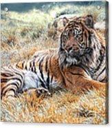 El Tigre Acrylic Print