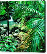 El Yunque Palm Trees And Waterfall Acrylic Print by Thomas R Fletcher