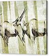 Eland-modern Acrylic Print