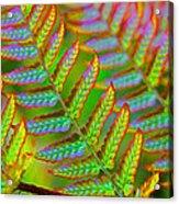 Electric Fern Acrylic Print
