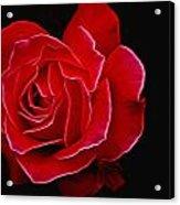 Electric Rose Acrylic Print