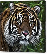 Electric Tiger Acrylic Print