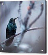 Electrical Blue Acrylic Print