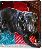 Electrostatic Dog And Blanket Acrylic Print