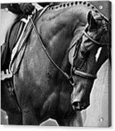 Elegance - Dressage Horse Acrylic Print