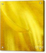 Elegance In Yellow Acrylic Print by Darren Fisher