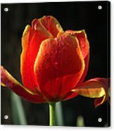 Elegance Of Spring Acrylic Print