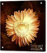 Elegant Flower Acrylic Print
