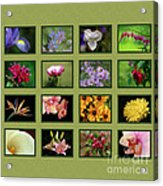 Elegant Flowers Collection Acrylic Print