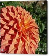 Elegant In Orange Acrylic Print