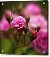 Elegant Pink Acrylic Print